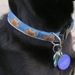 dog-with-tags-2