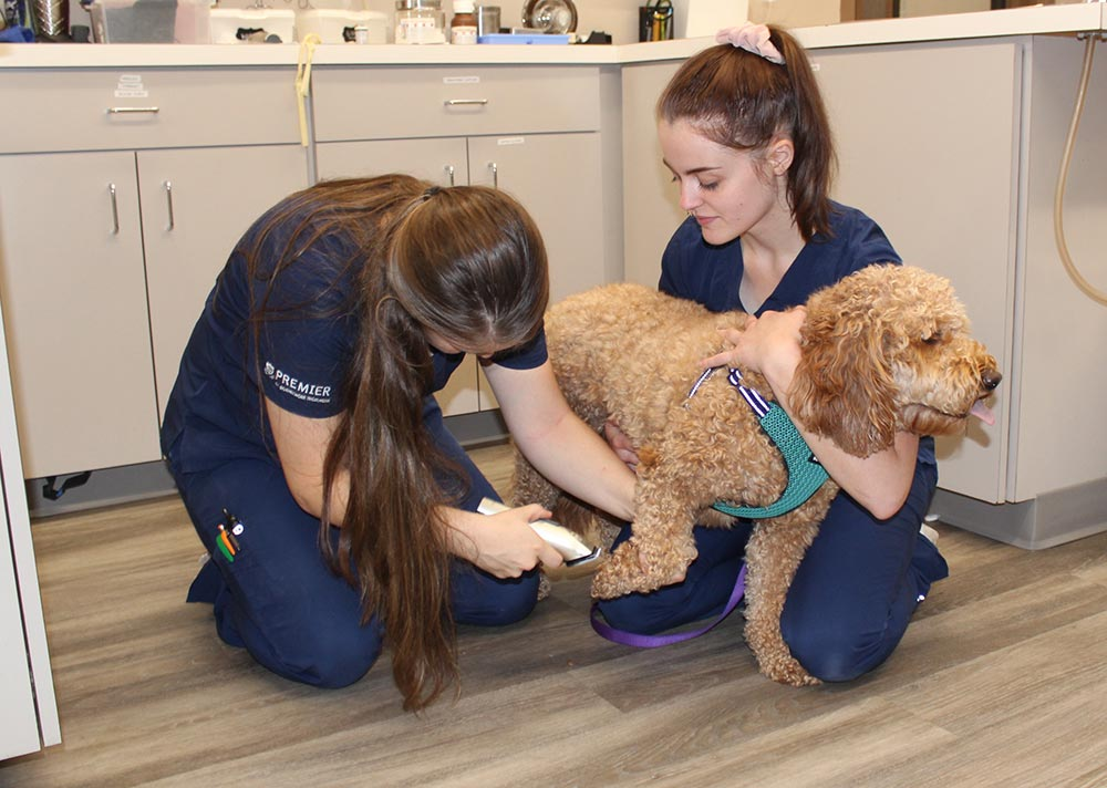Pet being examined for dermatological issues